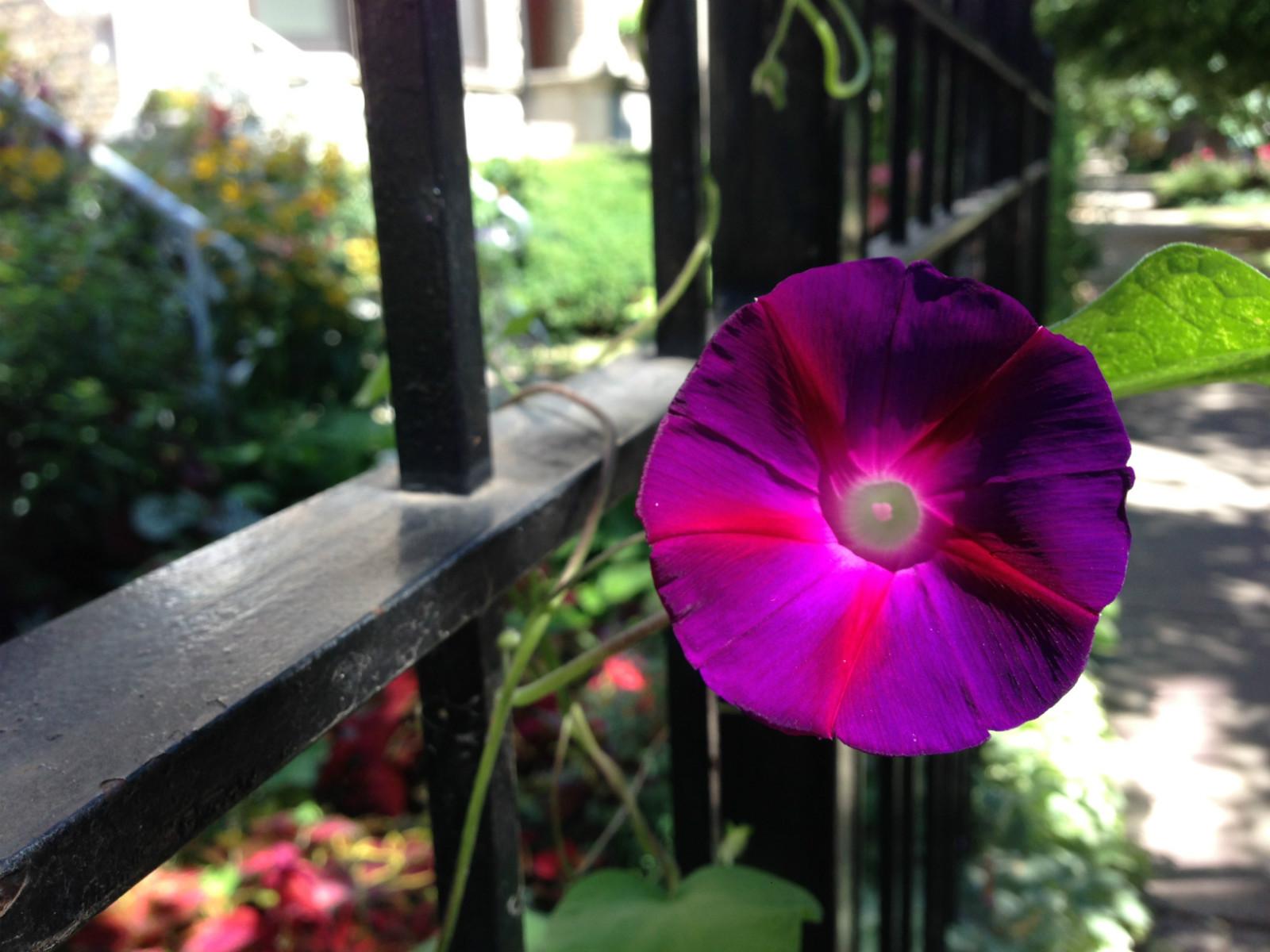 Friendly neighborhood flower.