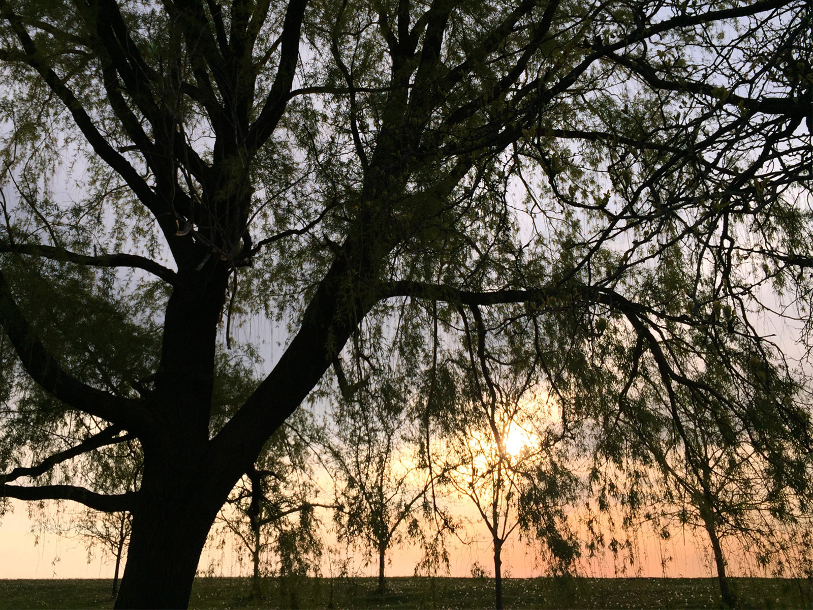 willow sunrise
