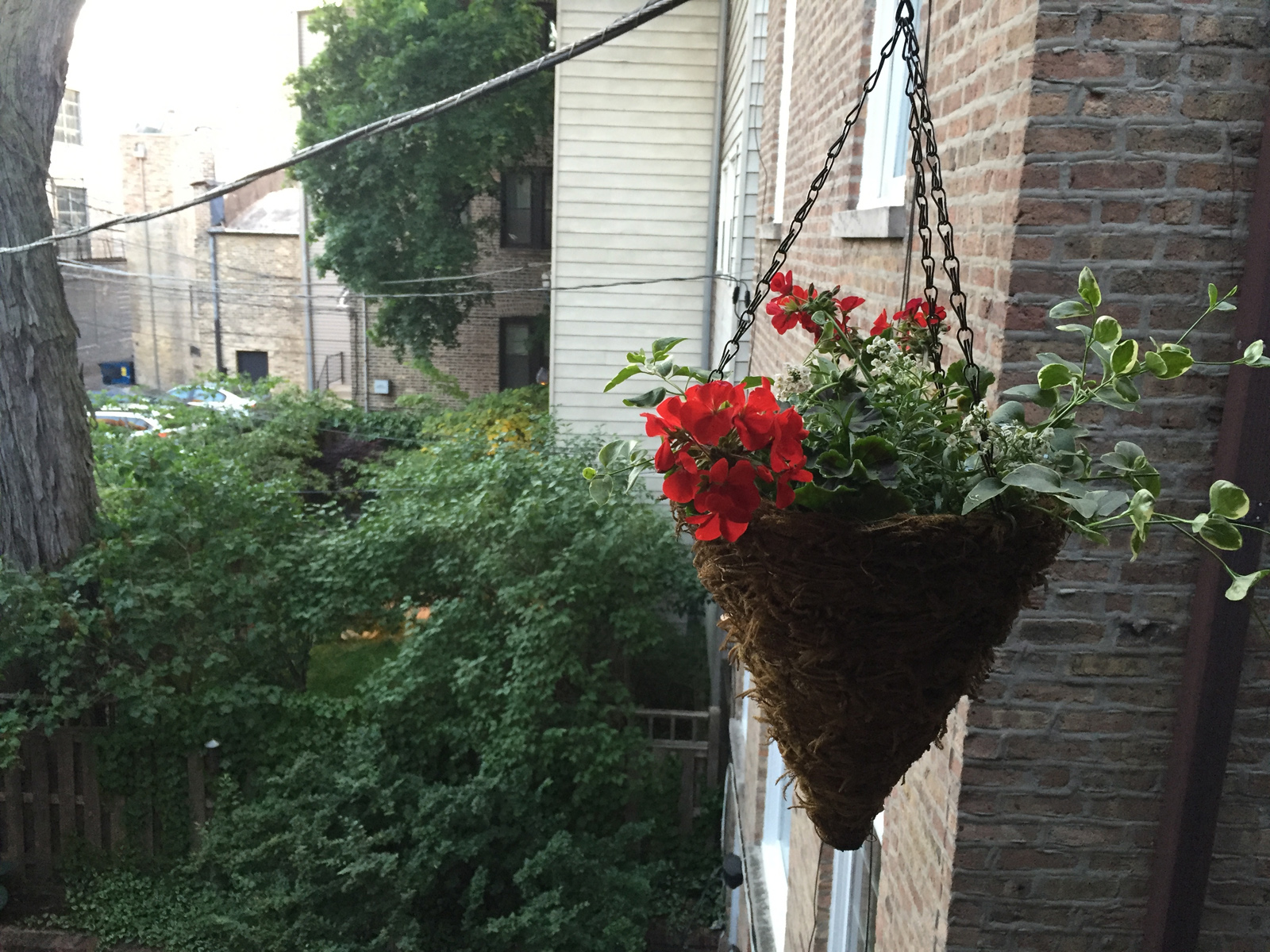Hanging Plant Basket DIY