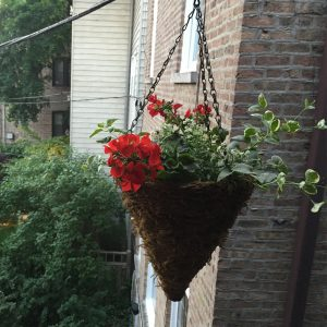 DIY Hanging Plant Cover